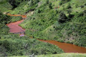 Tribal Salt Kills Beavers